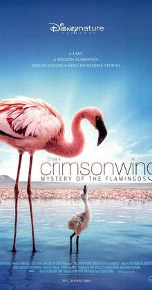The Crimson Wing Mystery of the Flamingos (2008)