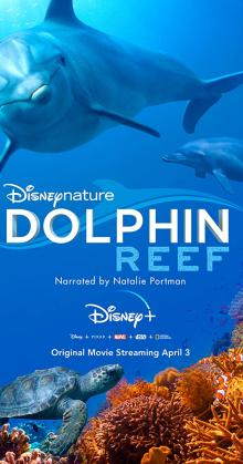 Dolphin Reef (2020)